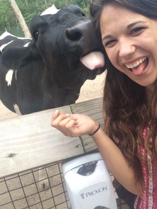 Estes animais apenas querem tirar uma Selfie (16)