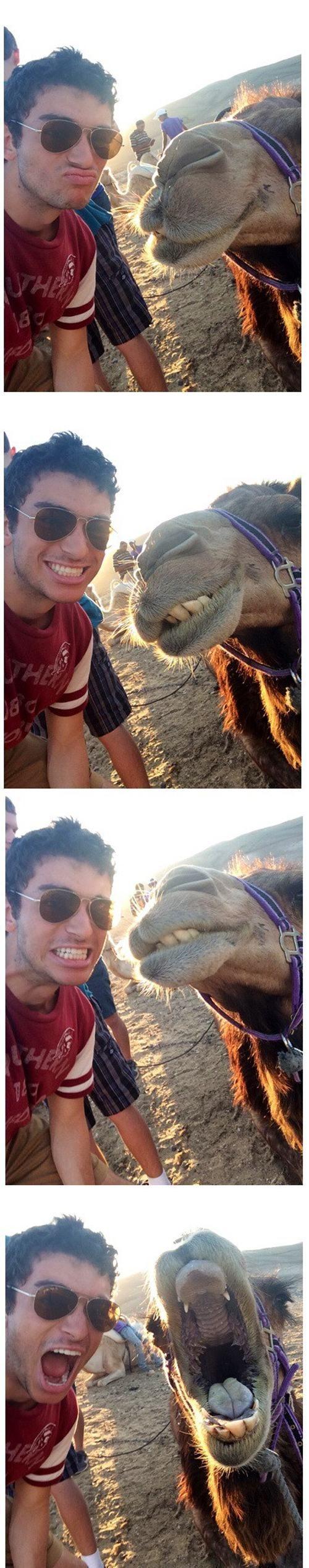 Estes animais apenas querem tirar uma Selfie 17 These animals just want to take a Selfie