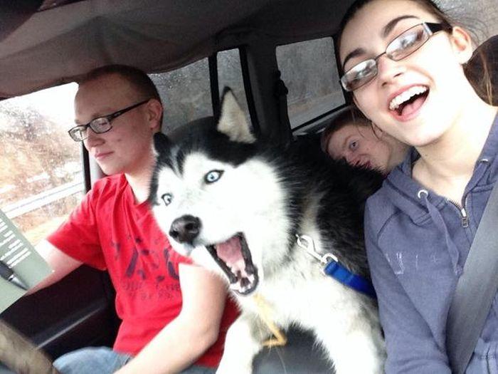 Estes animais apenas querem tirar uma Selfie (18)