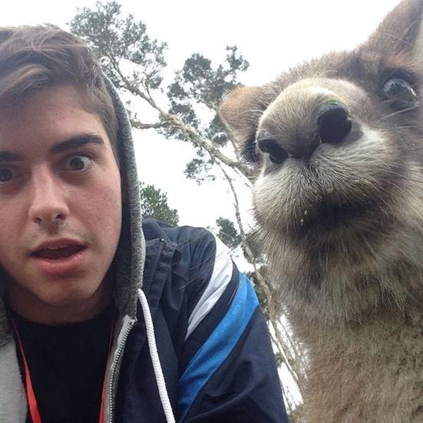 Estes animais apenas querem tirar uma Selfie 20 These animals just want to take a Selfie