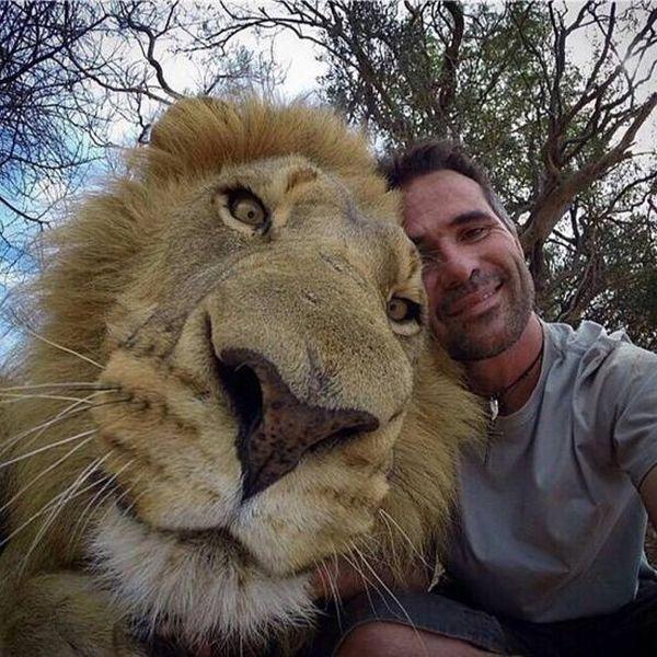 Estes animais apenas querem tirar uma Selfie 3 These animals just want to take a Selfie