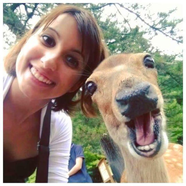 Estes animais apenas querem tirar uma Selfie (5)
