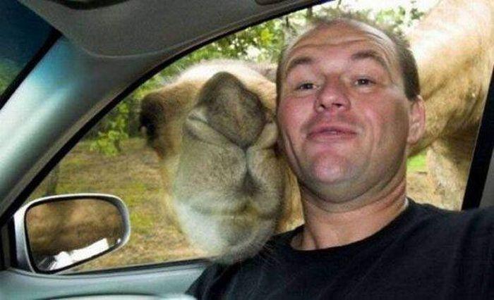 Estes animais apenas querem tirar uma Selfie 8 These animals just want to take a Selfie