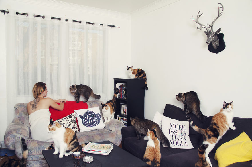 Fotos loucas de Cat Lovers (10)