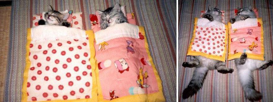 Fotos antes e depois de gatos crescendo (11)