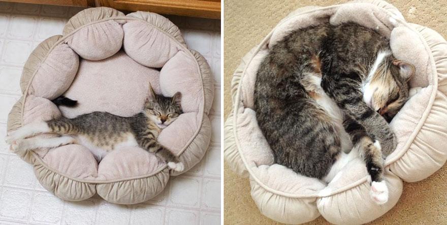 Fotos antes e depois de gatos crescendo (3)