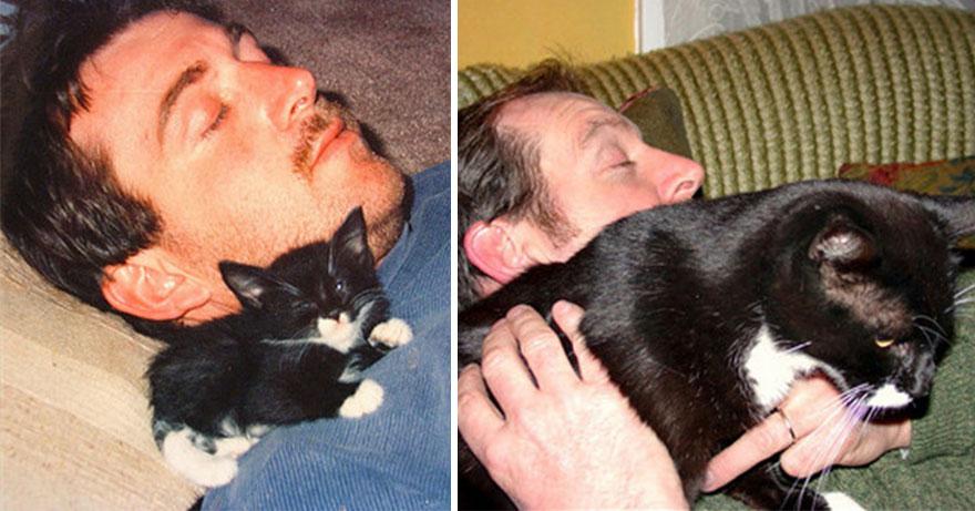 Fotos antes e depois de gatos crescendo (5)