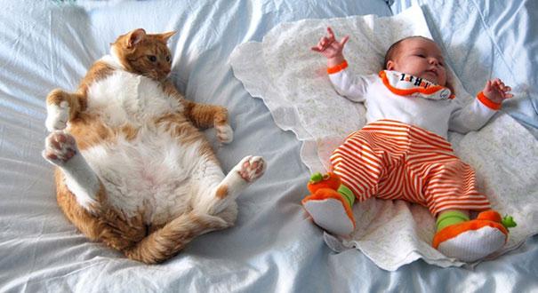 Fotos_Provam_Que_Seus_Filhos_Precisam_Um_Gato (20)