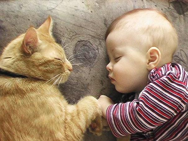 Fotos_Provam_Que_Seus_Filhos_Precisam_Um_Gato (6)