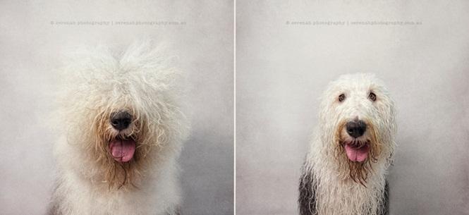 Fotos divertidas de cachorros antes e depois do banho (4)