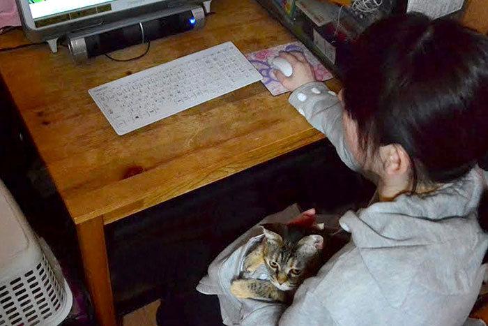 Casaco-com-bolso-especial-para-carregar-gatos (8)