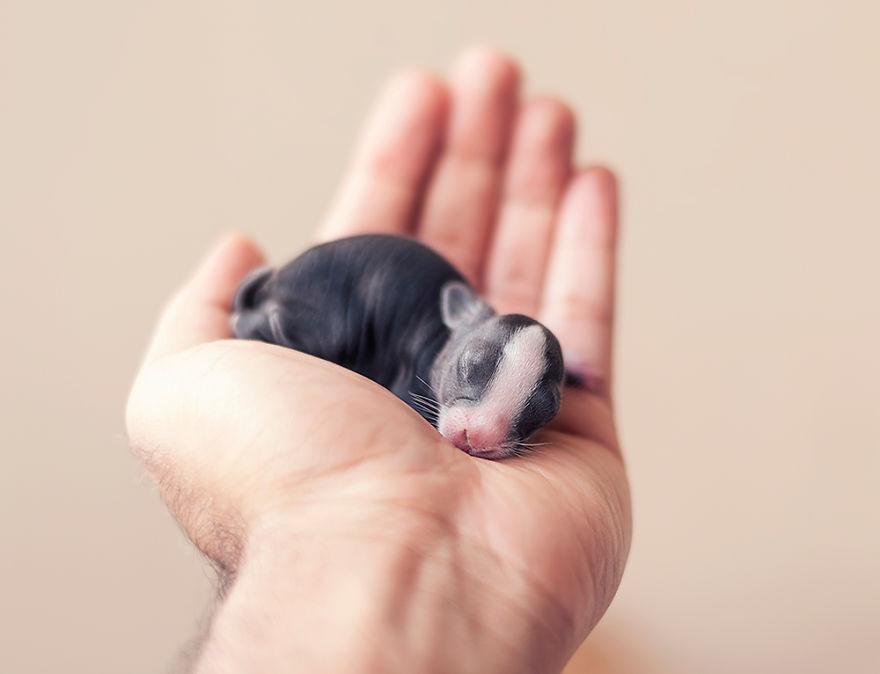 Fotos mostram o crescimento de um coelho (1)
