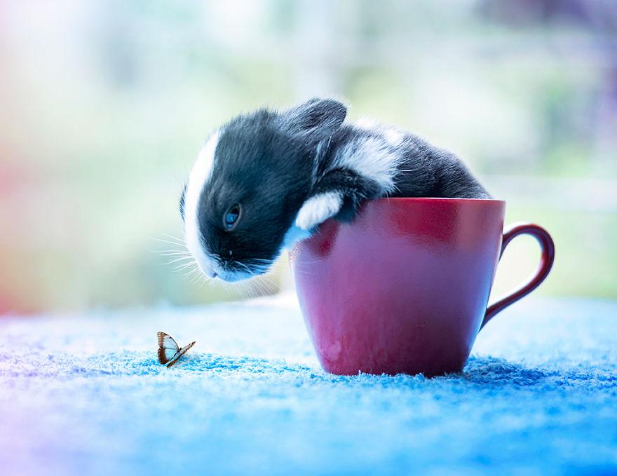 Fotos mostram o crescimento de um coelho (10)