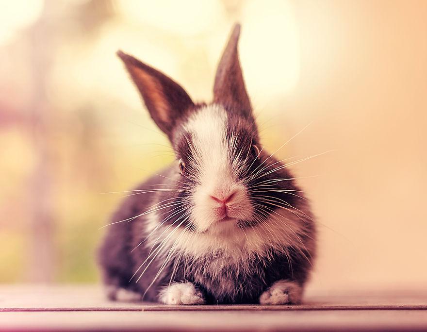 Fotos mostram o crescimento de um coelho (15)