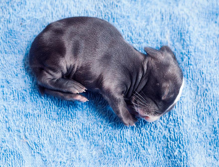 Fotos mostram o crescimento de um coelho (5)