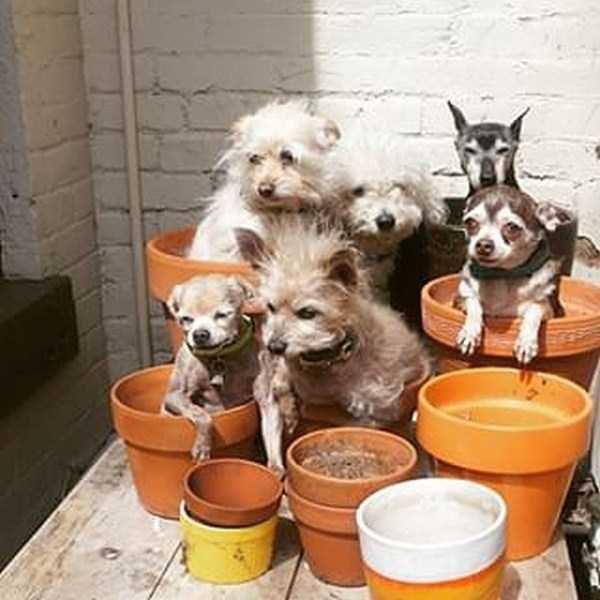 Homem-transformou-casa-em-abrigo-de-animais (10)
