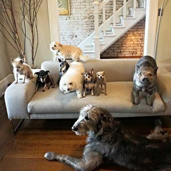 Homem-transformou-casa-em-abrigo-de-animais (23)
