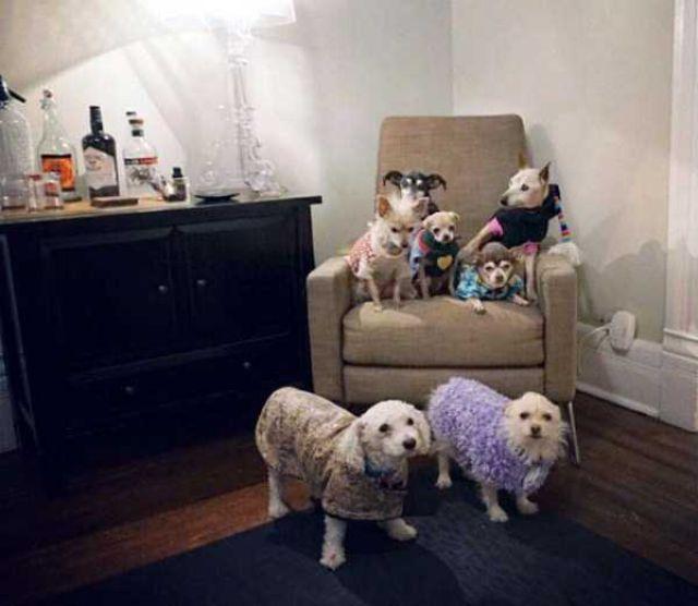 Homem-transformou-casa-em-abrigo-de-animais (28)