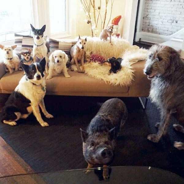 Homem-transformou-casa-em-abrigo-de-animais (29)