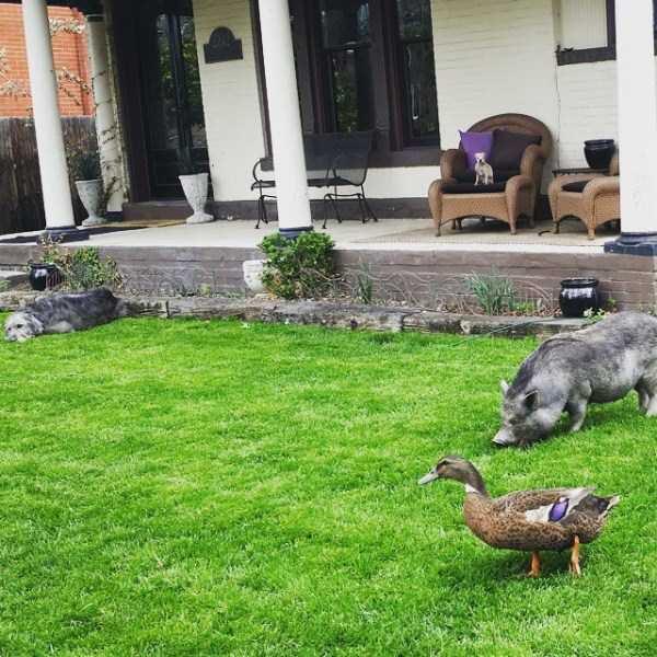 Homem-transformou-casa-em-abrigo-de-animais (4)