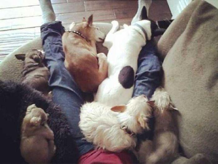 Homem-transformou-casa-em-abrigo-de-animais (5)