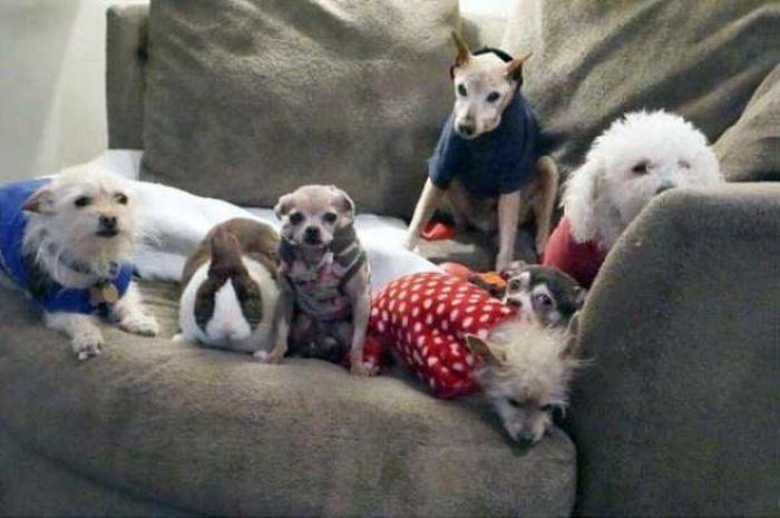 Homem-transformou-casa-em-abrigo-de-animais (7)