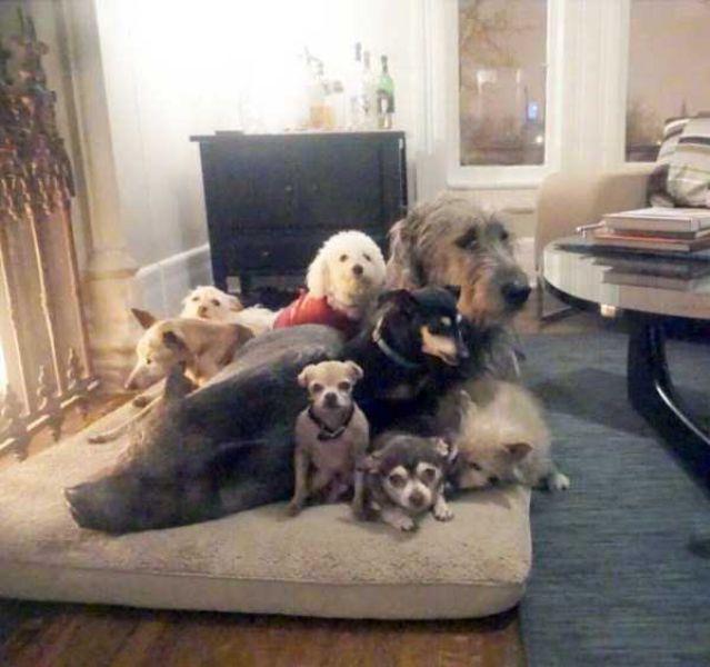 Homem-transformou-casa-em-abrigo-de-animais (9)