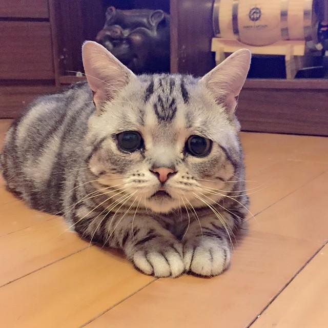 gato-mais-triste-da-Internet (13)
