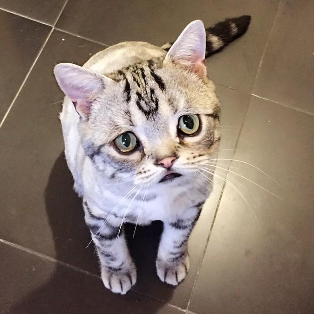 gato-mais-triste-da-Internet (2)
