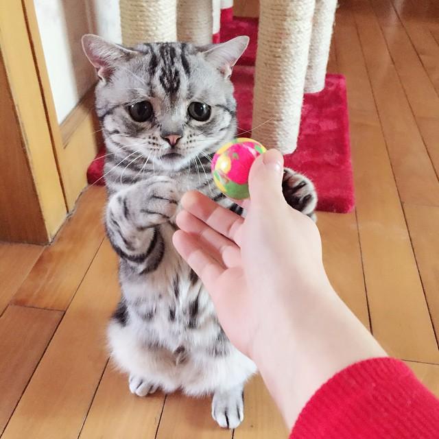 gato-mais-triste-da-Internet (3)