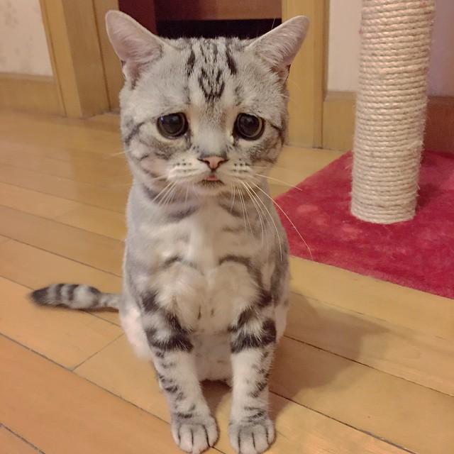 gato-mais-triste-da-Internet (5)