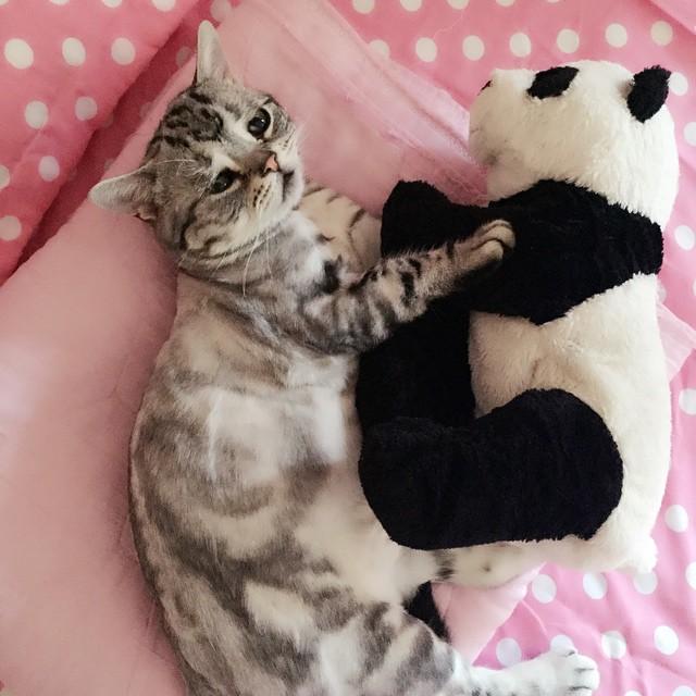 gato-mais-triste-da-Internet (8)