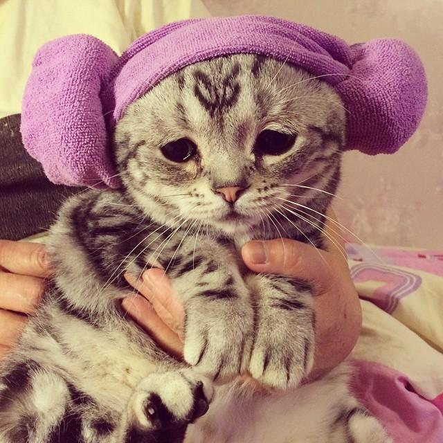 gato-mais-triste-da-Internet (9)