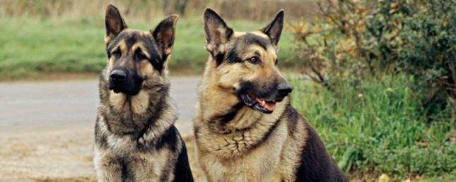 Nomes para cachorros - Mitologia