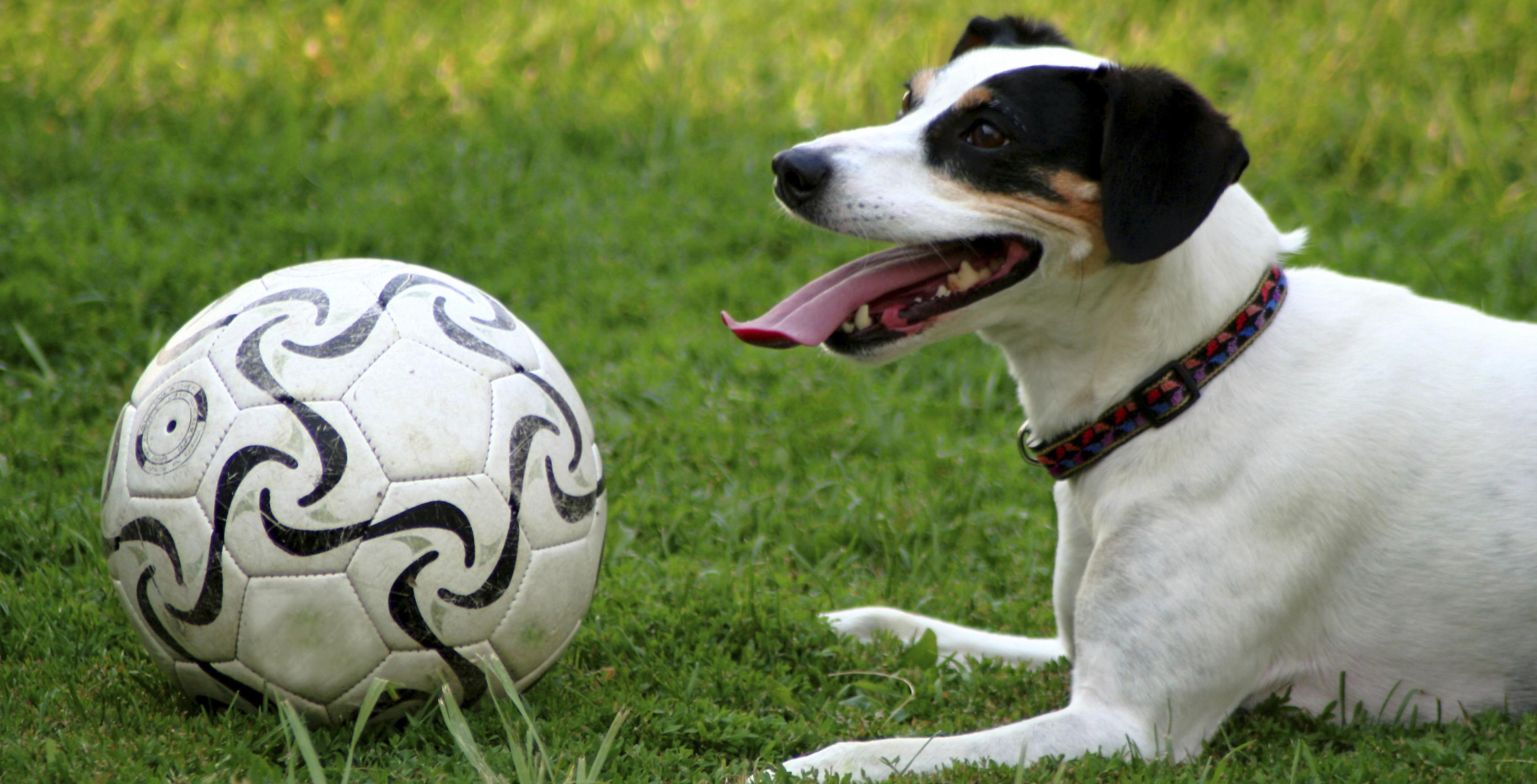 Nomes para cachorros - esporte