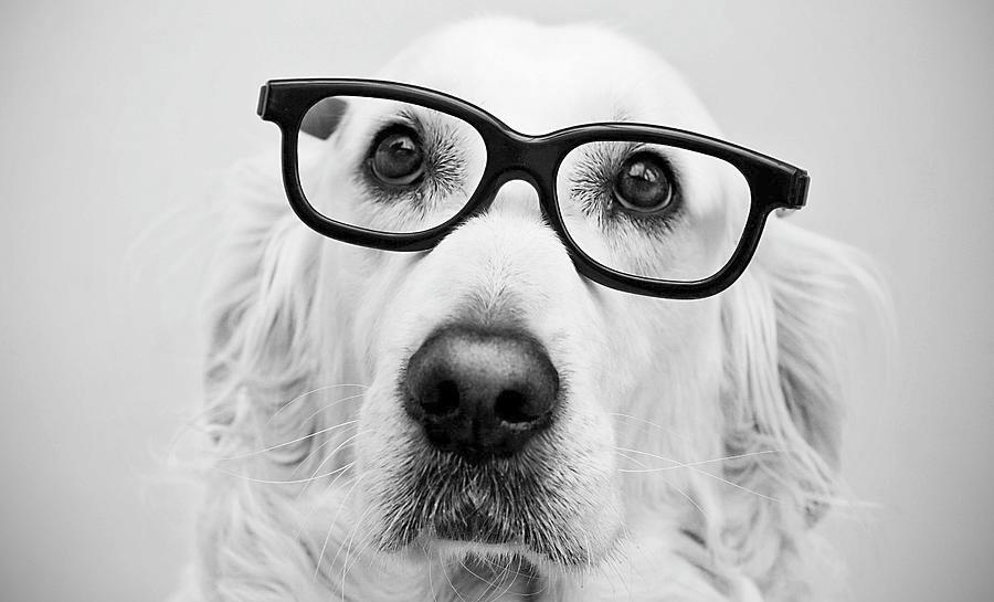 Nomes para cachorros - nerd