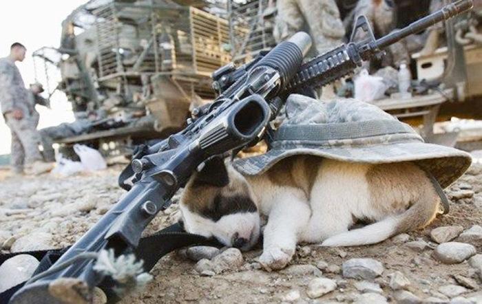 filhotes-de-cachorro-dormem-em-qualquer-lugar (10)