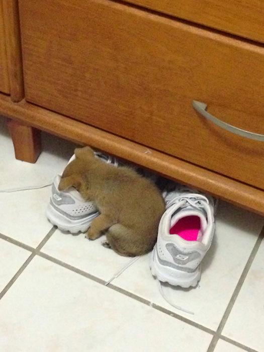 filhotes-de-cachorro-dormem-em-qualquer-lugar (19)