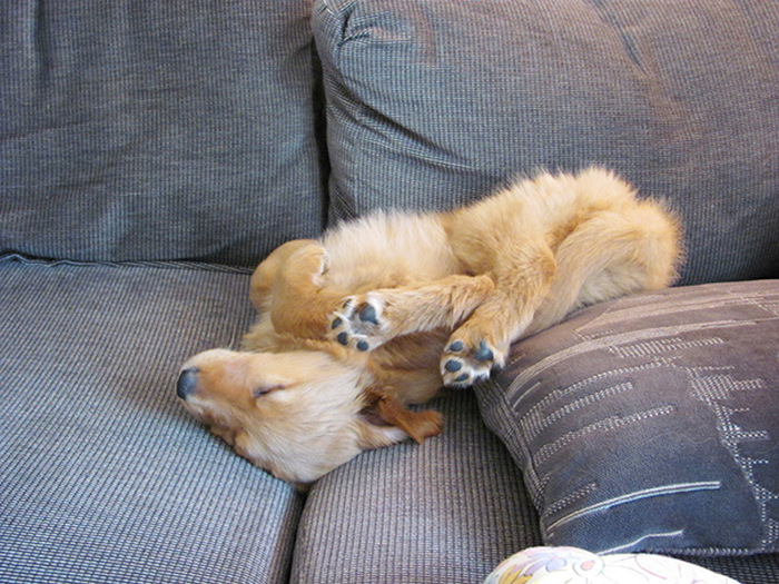 filhotes-de-cachorro-dormem-em-qualquer-lugar (30)