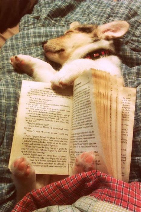 filhotes-de-cachorro-dormem-em-qualquer-lugar (32)