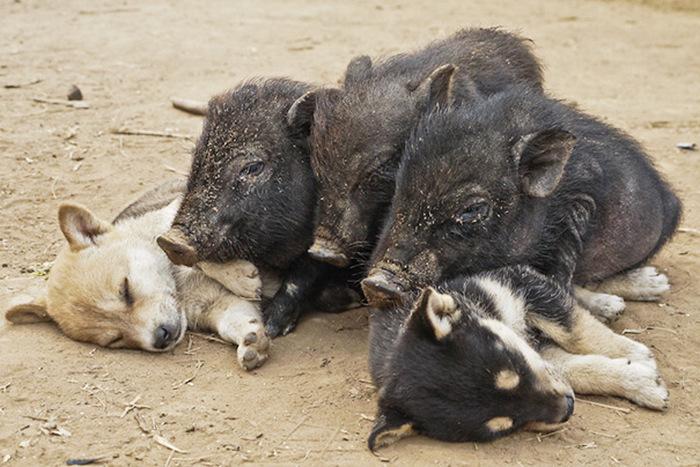 filhotes-de-cachorro-dormem-em-qualquer-lugar (4)