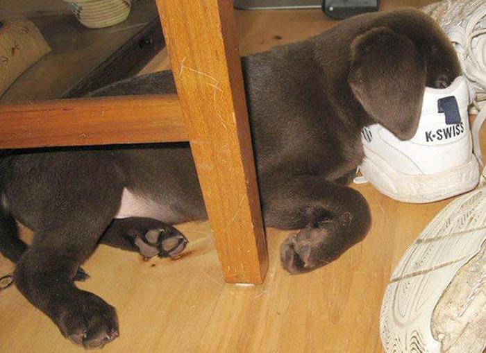 filhotes-de-cachorro-dormem-em-qualquer-lugar (8)
