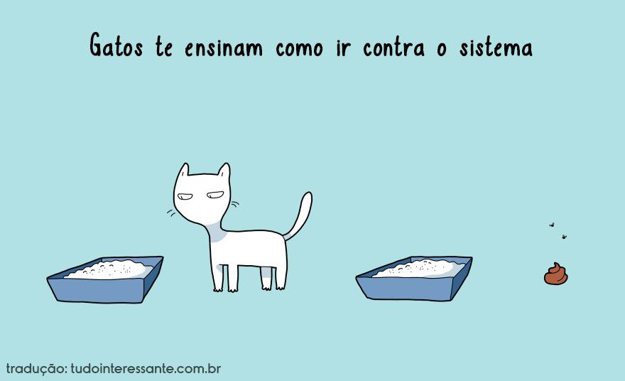 vantagens-de-se-ter-um-gato-em-casa (3)