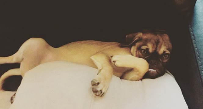 Earl-o-cachorro-mais-mal-humorado-da-internet (2)