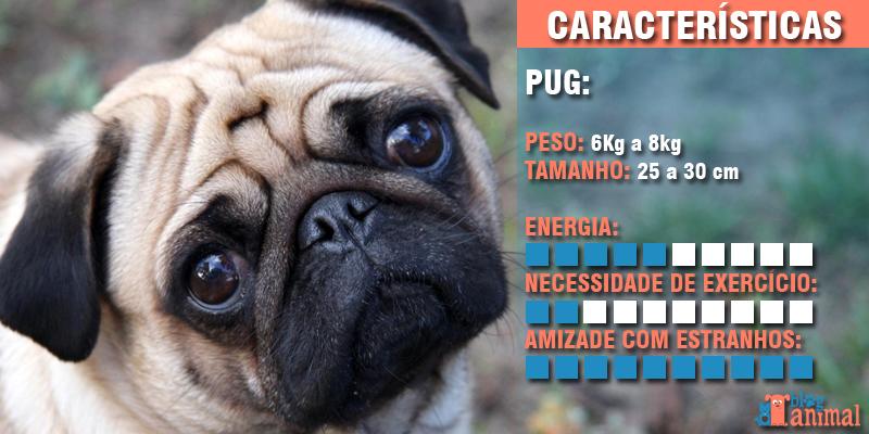 cachorros para apartamento - pug
