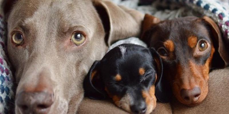 cachorros para apartamentos 2