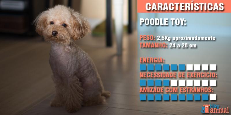 cachorros para apartamentos - poodle toy
