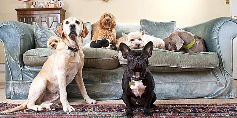 cachorros para apartamentos