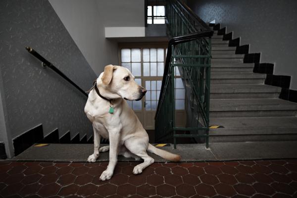 10 dicas para viver com um cachorro em apartamento