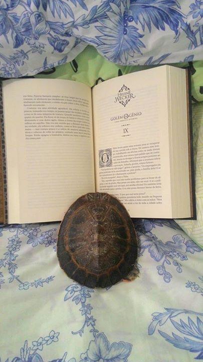 Amantes-de-livros-e-animais (33)